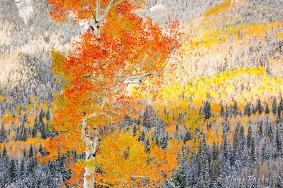 Individuality - Uncompahgre National Forest, Colorado