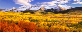 Sea of Aspens - West Elk Mountains, Colorado