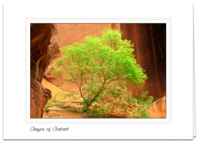 Art Card - Canyon Of Contrast