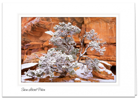 Snow Laced Pinon - Grand Gulch Plateau, Utah