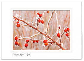 Frosted Rose Hips - Marshall Mesa, Colorado
