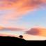 Lone Pine Sunset - Colorado