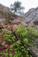 Umbrella Rock Rain - Flagstaff Mountain, Colorado