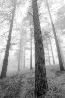 Into The Mist - Front Range, Colorado