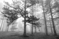 Shadow Pines - Front Range, Colorado