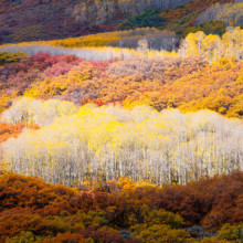 Quilted Autumn - Colorado