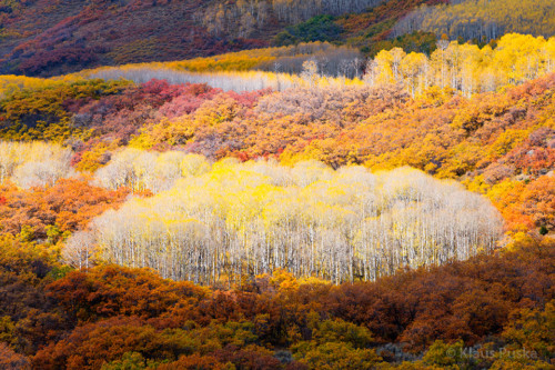 Quilted Autumn - Colorado