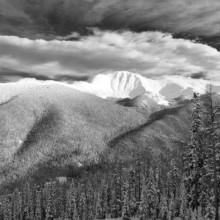 Winter Bear Claw - Colorado
