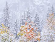 Blending Seasons - Rocky Mountain National Park, Colorado