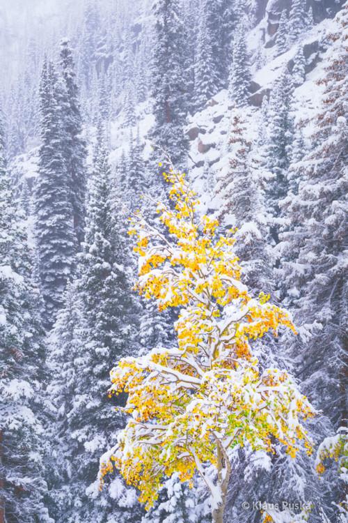 Perseverance - Rocky Mountain National Park, Colorado